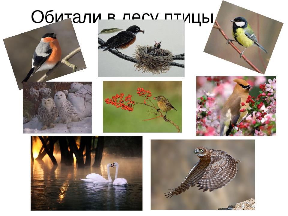 Обитали в лесу птицы…