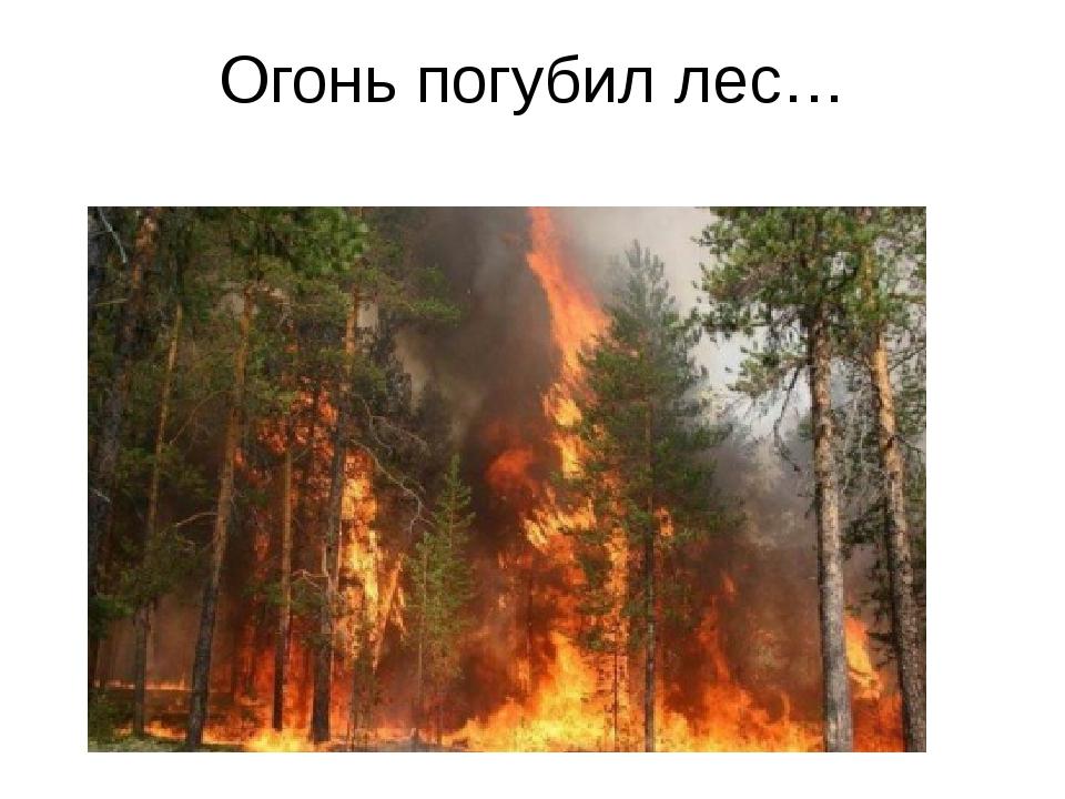 Огонь погубил лес…