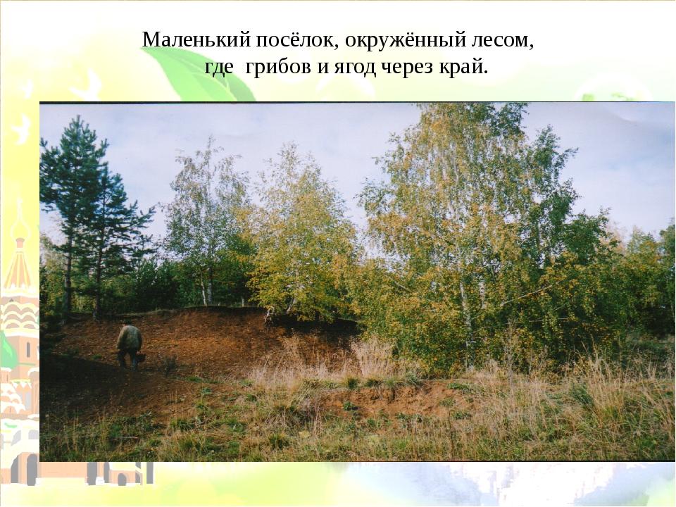Маленький посёлок, окружённый лесом, где грибов и ягод через край.