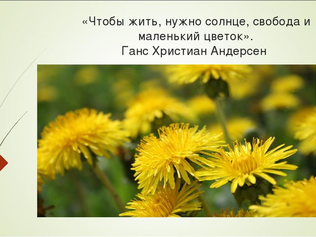 «Чтобы жить, нужно солнце, свобода и маленький цветок». Ганс Христиан Андерсен