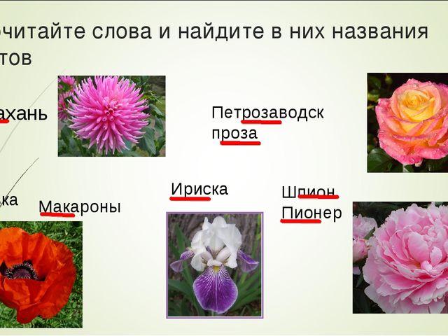 Прочитайте слова и найдите в них названия цветов Астрахань Петрозаводск проза...