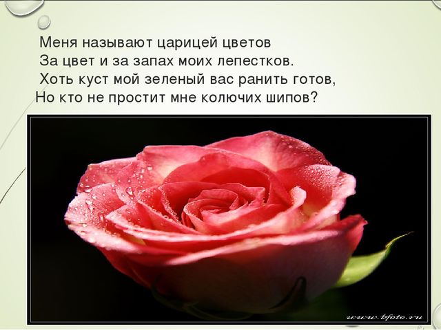 Меня называют царицей цветов За цвет и за запах моих лепестков. Хоть куст мо...