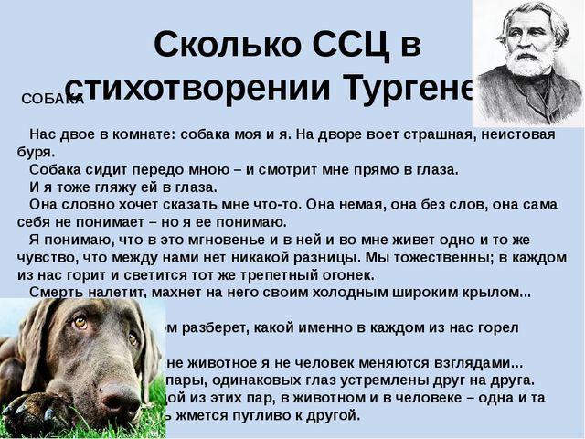 Сколько ССЦ в стихотворении Тургенева СОБАКА Нас двое в комнате: собака...