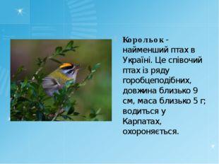 Корольок - найменший птах в Україні. Це співочий птах із ряду горобцеподібни