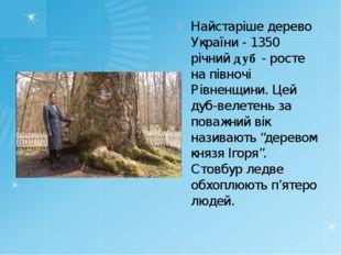 Найстаріше дерево України - 1350 річний дуб - росте на півночі Рівненщини. Це