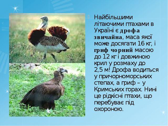 Найбільшими літаючими птахами в Україні є дрофа звичайна, маса якої може дося...