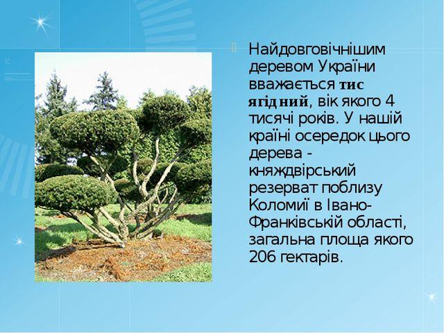 Найдовговічнішим деревом України вважається тис ягідний, вік якого 4 тисячі р...