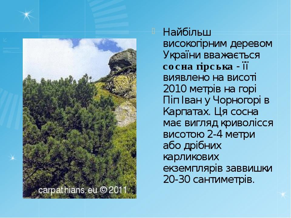 Найбільш високогірним деревом України вважається сосна гірська - її виявлено...