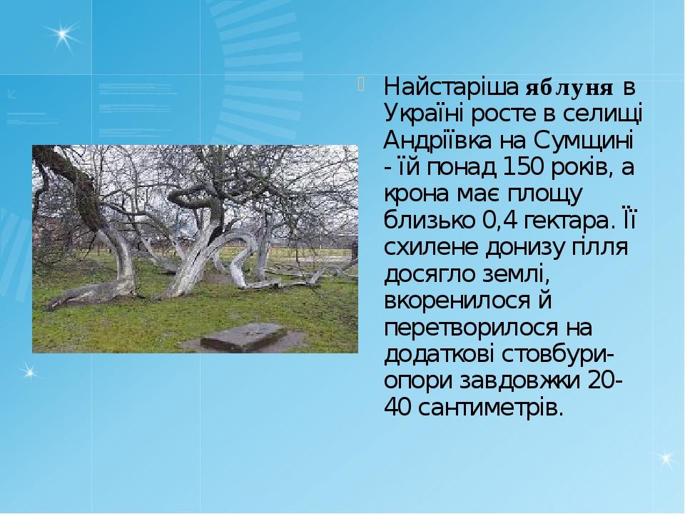 Найстаріша яблуня в Україні росте в селищі Андріївка на Сумщині - їй понад 15...