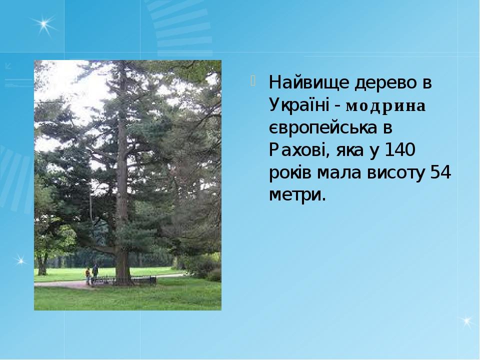 Найвище дерево в Україні - модрина європейська в Рахові, яка у 140 років мала...