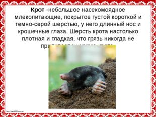 Крот-небольшое насекомоядное млекопитающие, покрытое густой короткой и темно