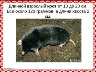 Длинной взрослыйкротот 10 до 20 см, Все около 120 граммов, а длина хвоста 2