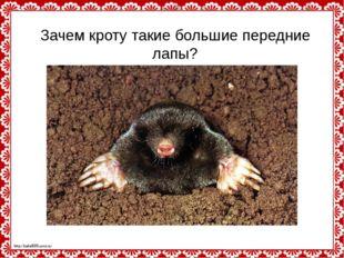 Зачем кроту такие большие передние лапы? http://linda6035.ucoz.ru/