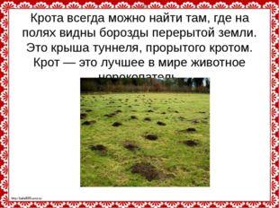 Крота всегда можно найти там, где на полях видны борозды перерытой земли. Это