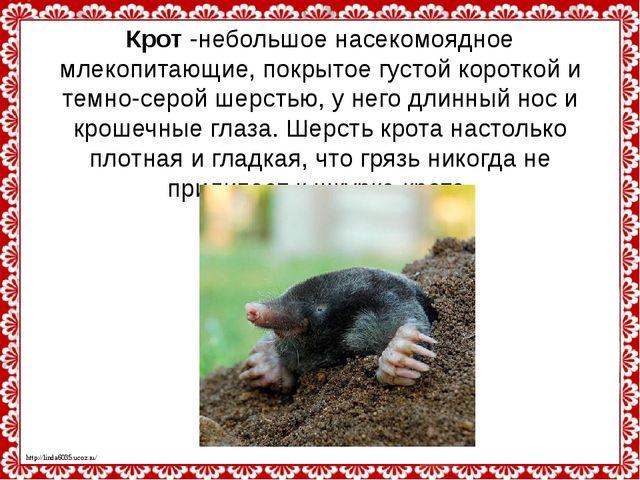 Крот-небольшое насекомоядное млекопитающие, покрытое густой короткой и темно...