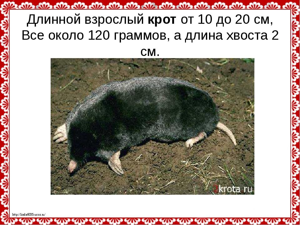 Длинной взрослыйкротот 10 до 20 см, Все около 120 граммов, а длина хвоста 2...