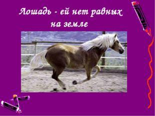 Лошадь - ей нет равных на земле