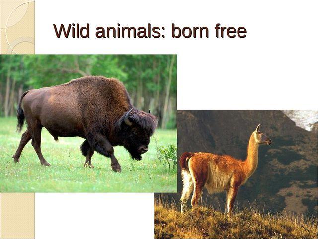 Wild animals: born free