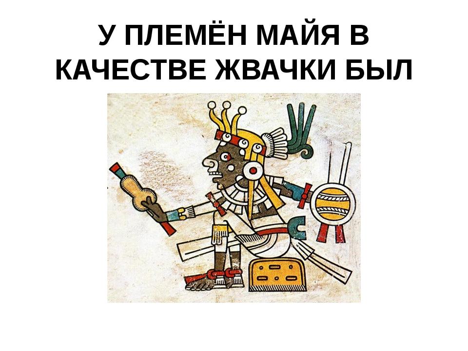 У ПЛЕМЁН МАЙЯ В КАЧЕСТВЕ ЖВАЧКИ БЫЛ КАУЧУК