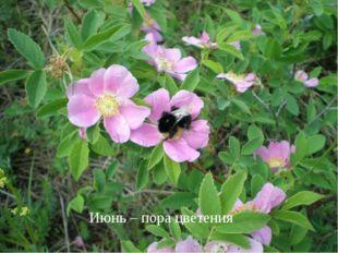 Июнь – пора цветения