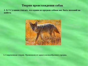 Теории происхождения собак 2. К.Т.Сулимов считает, что одним из предков собак