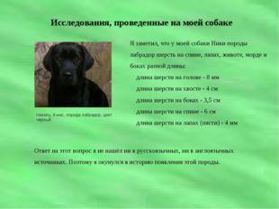 Исследования, проведенные на моей собаке Николь, 8 мес, порода лабрадор, цве