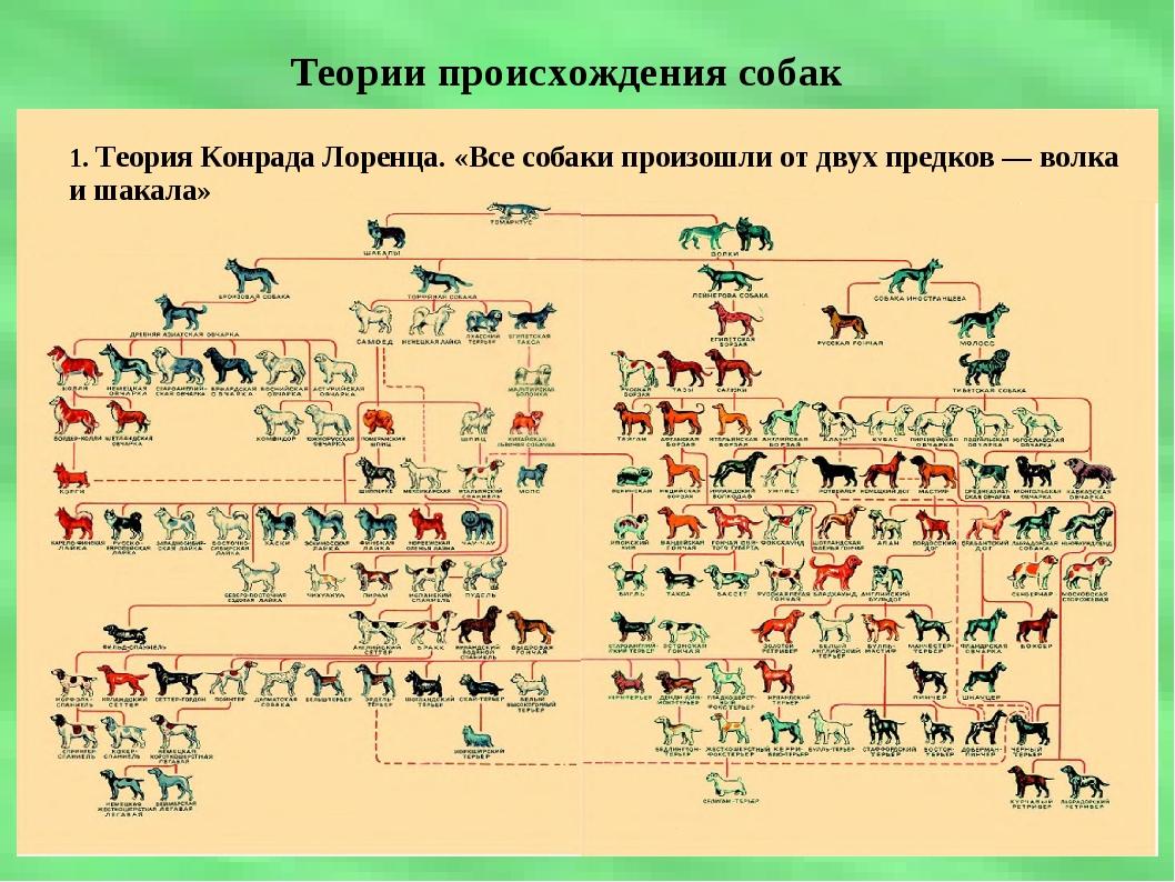Теории происхождения собак 1. Теория Конрада Лоренца. «Все собаки произошли о...