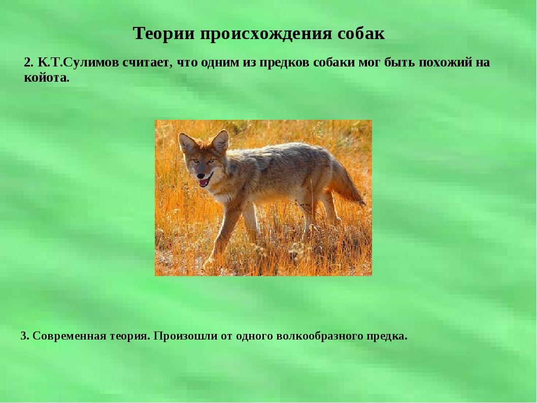 Теории происхождения собак 2. К.Т.Сулимов считает, что одним из предков собак...