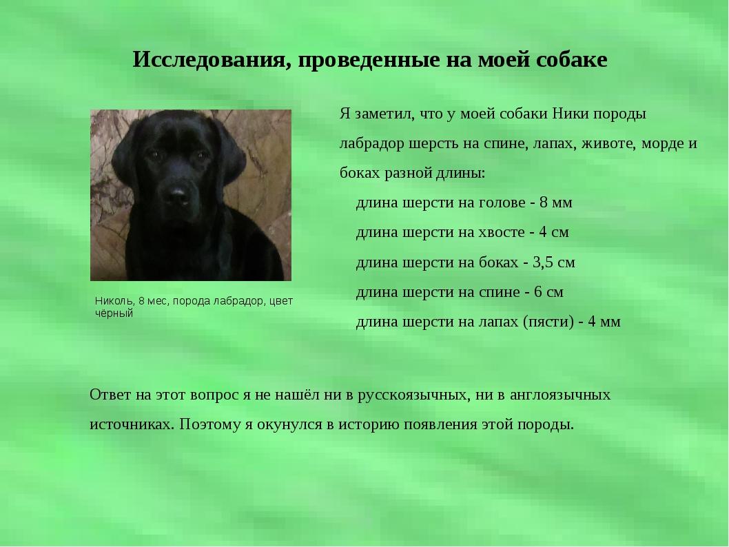 Исследования, проведенные на моей собаке Николь, 8 мес, порода лабрадор, цве...