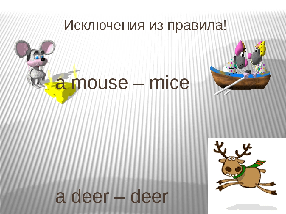 Исключения из правила! 			 			a mouse – mice 		 		 		 			a deer – deer