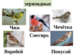 зерноядные Чиж Чечётка Снегирь Воробей Попугай