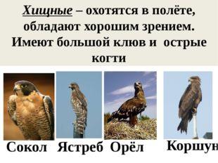 Хищные – охотятся в полёте, обладают хорошим зрением. Имеют большой клюв и ос