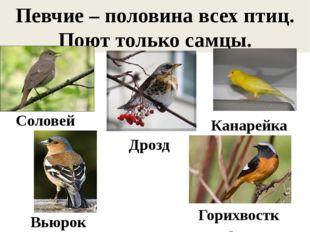 Певчие – половина всех птиц. Поют только самцы. Соловей Дрозд Канарейка Вьюро