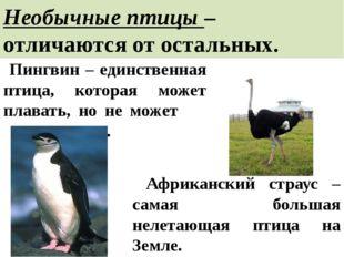 Необычные птицы – отличаются от остальных. Пингвин – единственная птица, кото