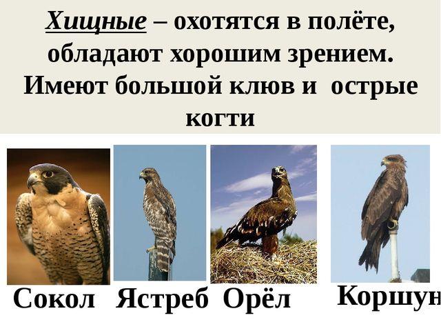 Хищные – охотятся в полёте, обладают хорошим зрением. Имеют большой клюв и ос...