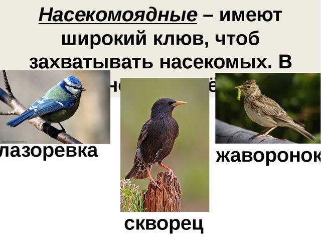 Насекомоядные – имеют широкий клюв, чтоб захватывать насекомых. В основном пе...