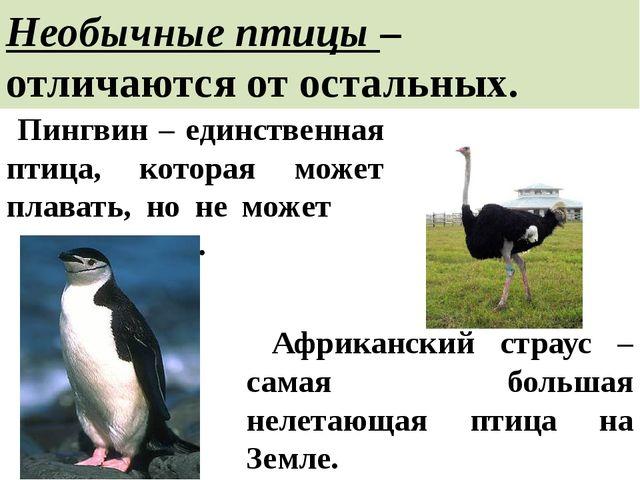 Необычные птицы – отличаются от остальных. Пингвин – единственная птица, кото...