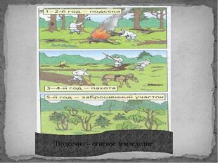 Подсечно – огневое земледелие