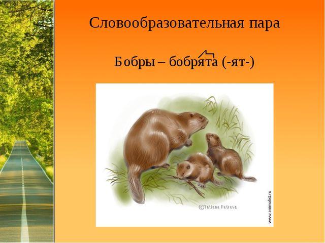 Словообразовательная пара Бобры – бобрята (-ят-) ProPowerPoint.Ru