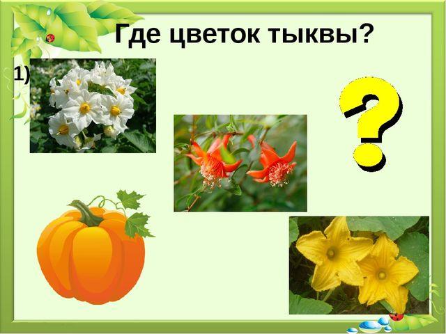 Где цветок тыквы? 1) 2) 3)