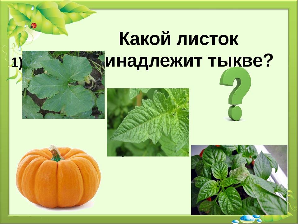 Какой листок принадлежит тыкве? 1) 2) 3)
