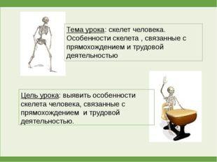 Тема урока: скелет человека. Особенности скелета , связанные с прямохождением