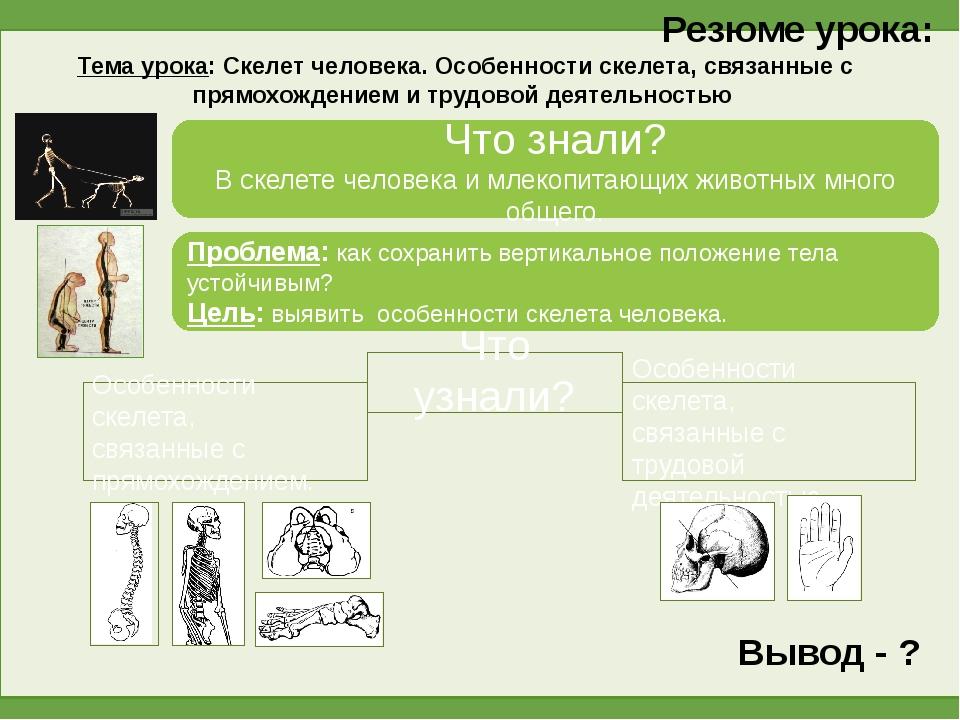 Резюме урока: Тема урока: Скелет человека. Особенности скелета, связанные с п...