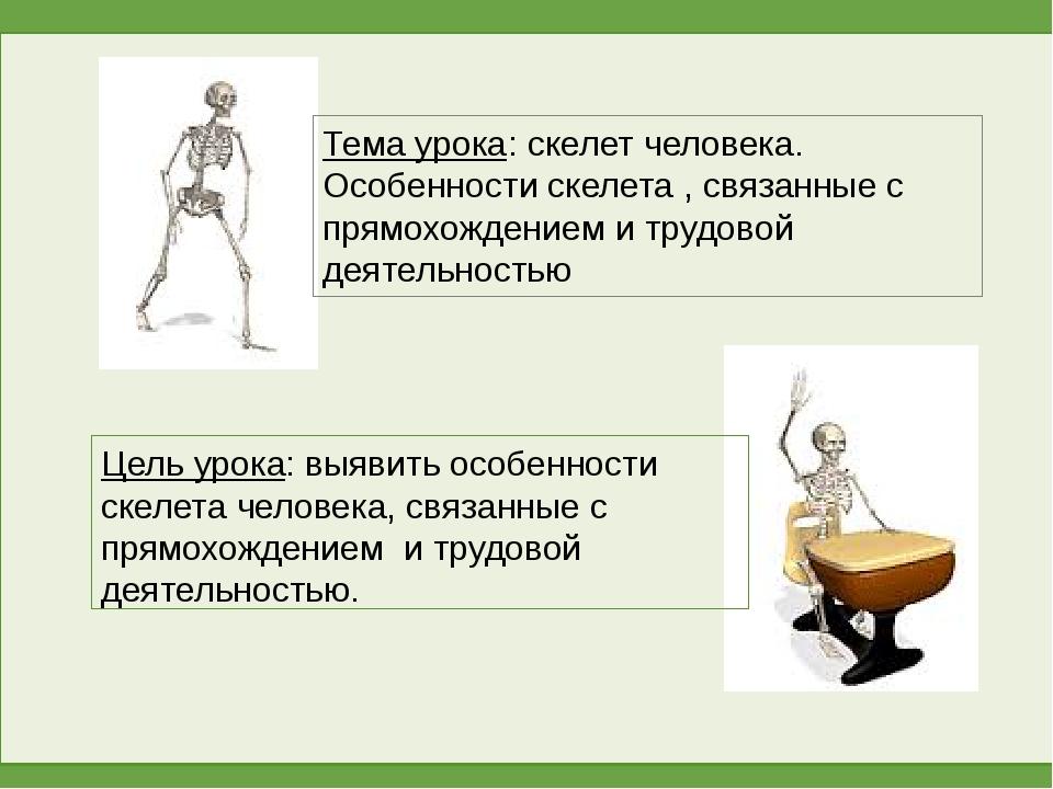 Тема урока: скелет человека. Особенности скелета , связанные с прямохождением...