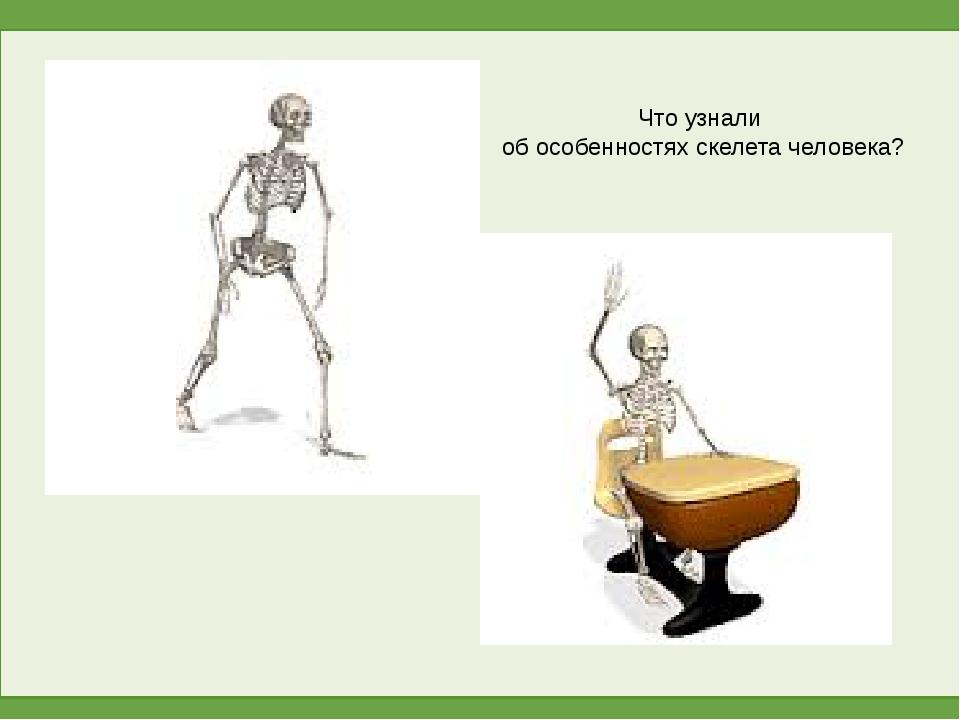 Что узнали об особенностях скелета человека?