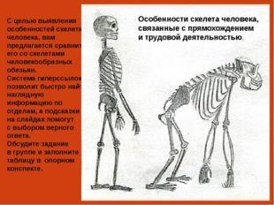 Череп человека Череп павиана Подсказка Объем мозга человека – около 1400 см3