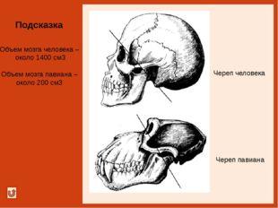 Подсказка Грудная клетка человека Грудная клетка гориллы Направление сжатия-?