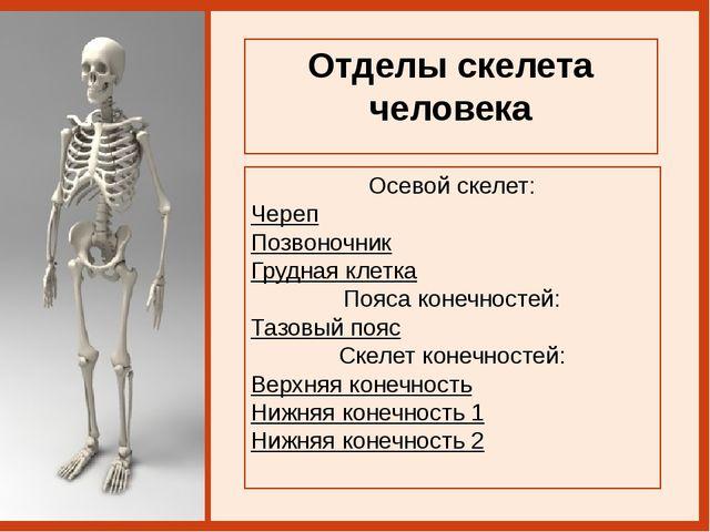 Позвоночник шимпанзе Позвоночник человека Подсказка изгибы