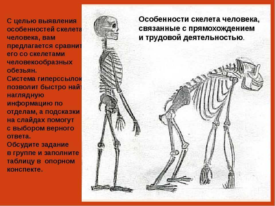 Череп человека Череп павиана Подсказка Объем мозга человека – около 1400 см3...