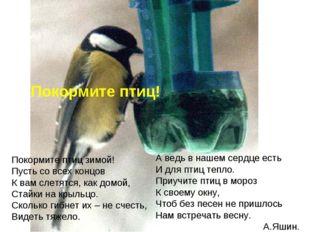 Покормите птиц! А ведь в нашем сердце есть И для птиц тепло. Приучите птиц в